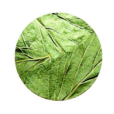 Смородина черная лист 50г